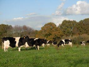 Visite de la ferme des 7 chemins avec Cédric et Hervé