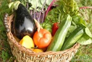 Panier d'été de légumes bio